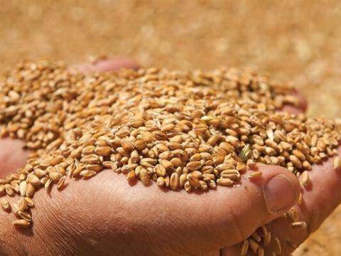 Как списать потери зерна при сушке и очистке